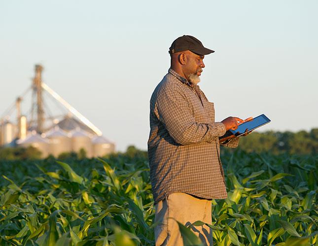 Farmer in field of crops using a ipad