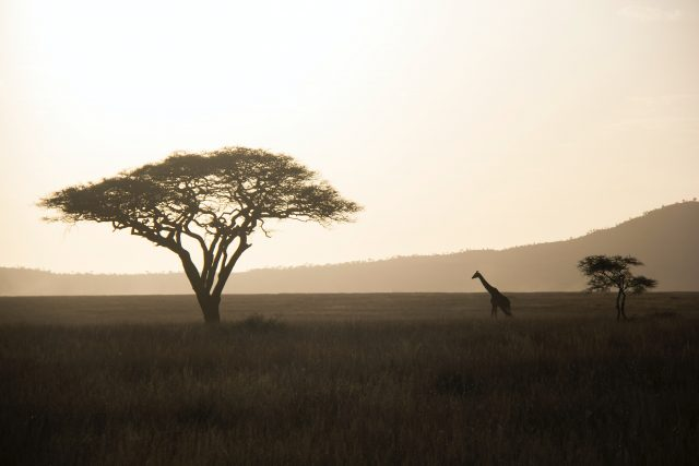 Nominet's tech tools helping track poachers
