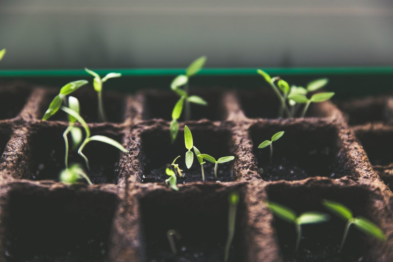 Lessons from a CISO: more gardening required